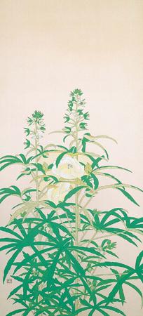 土田麦僊「黄蜀葵」HP2